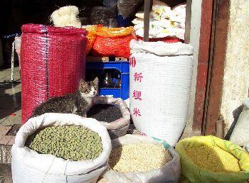 Um autentico gato de armazem chines! Fofo, gentil e ronronante. Mia igualzinho aos gatos brasileiros, de modo que conseguimos nos entender as mil maravilhas...